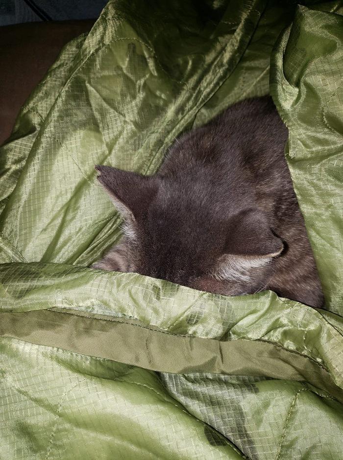 Я спрятался
