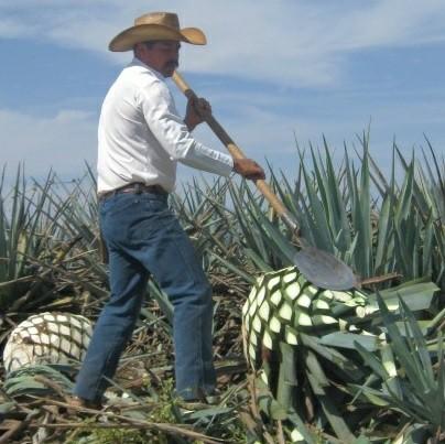 Tequila. Текила, Алкоголь, Текст, Длиннопост, Выбор напитка
