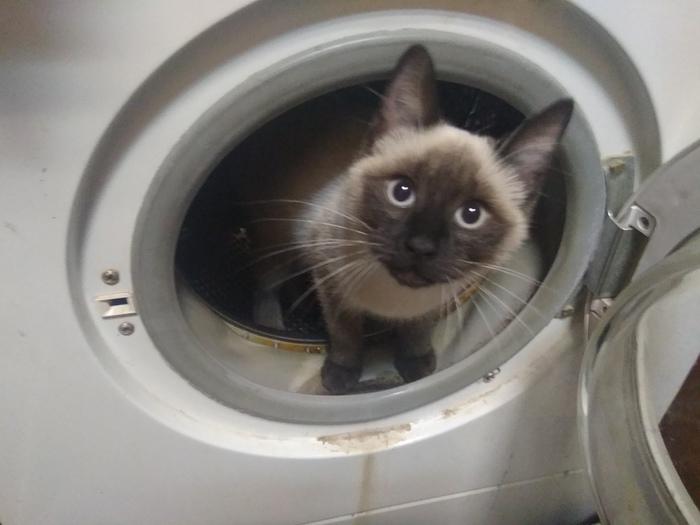 Присоединяюсь к волне котиков на Пикабу.