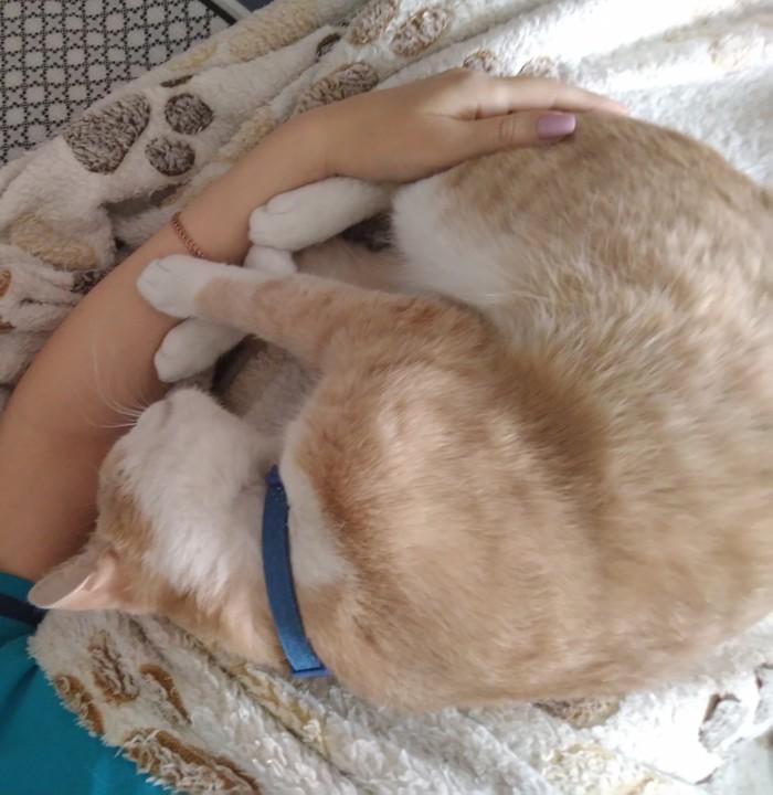 Кратко о том, как я встаю утром в воскресенье ) Кот, Котомафия, Хреновая погода, Недоброе утро, Длиннопост