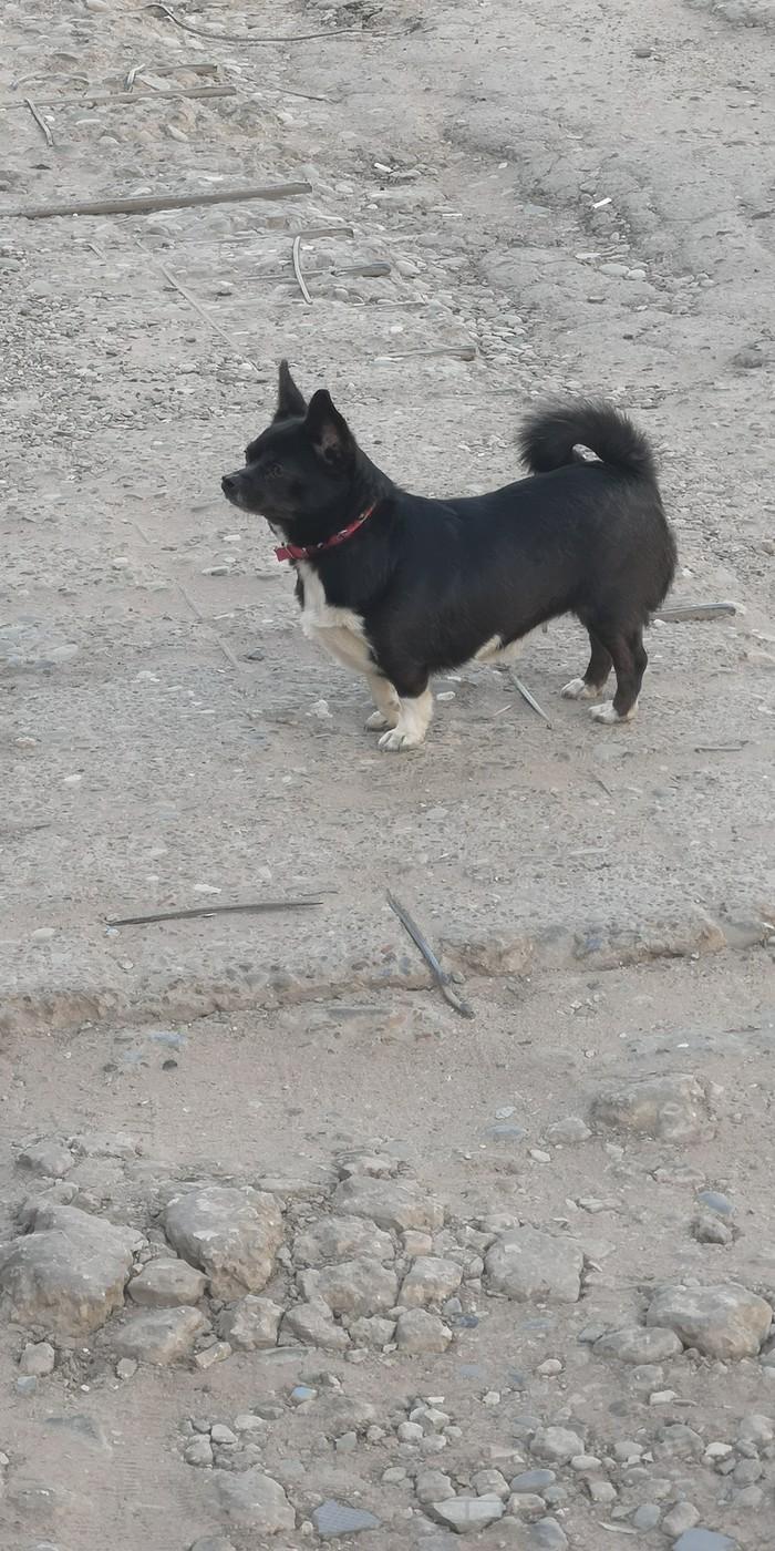Собака-потеряшка Астрахань Собака, Пропала собака, Без рейтинга, Длиннопост, Астрахань