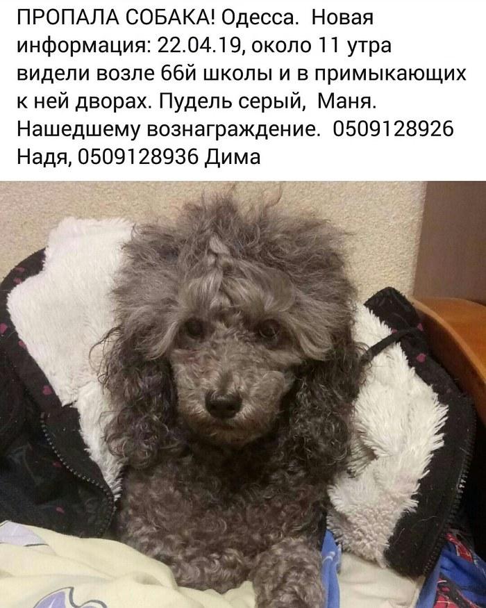 Пропала собака! Одесса. Пересыпь.