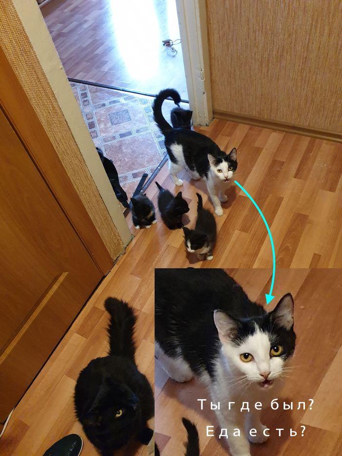 Когда вообще не собирался брать котов Кот, Котомафия, Котята, Милота, Москва, Любовь, Длиннопост