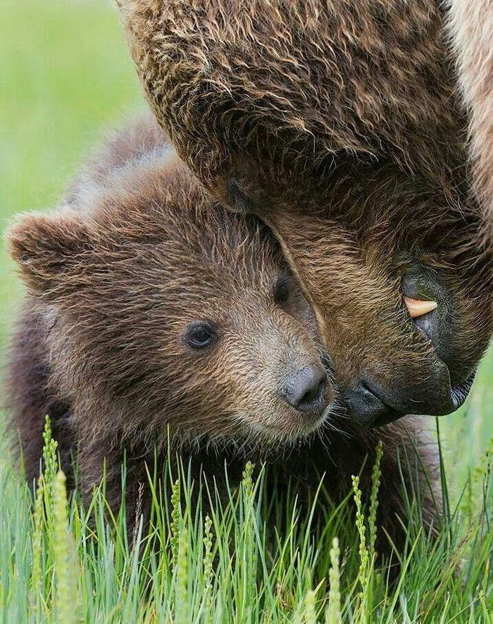 Медвежность