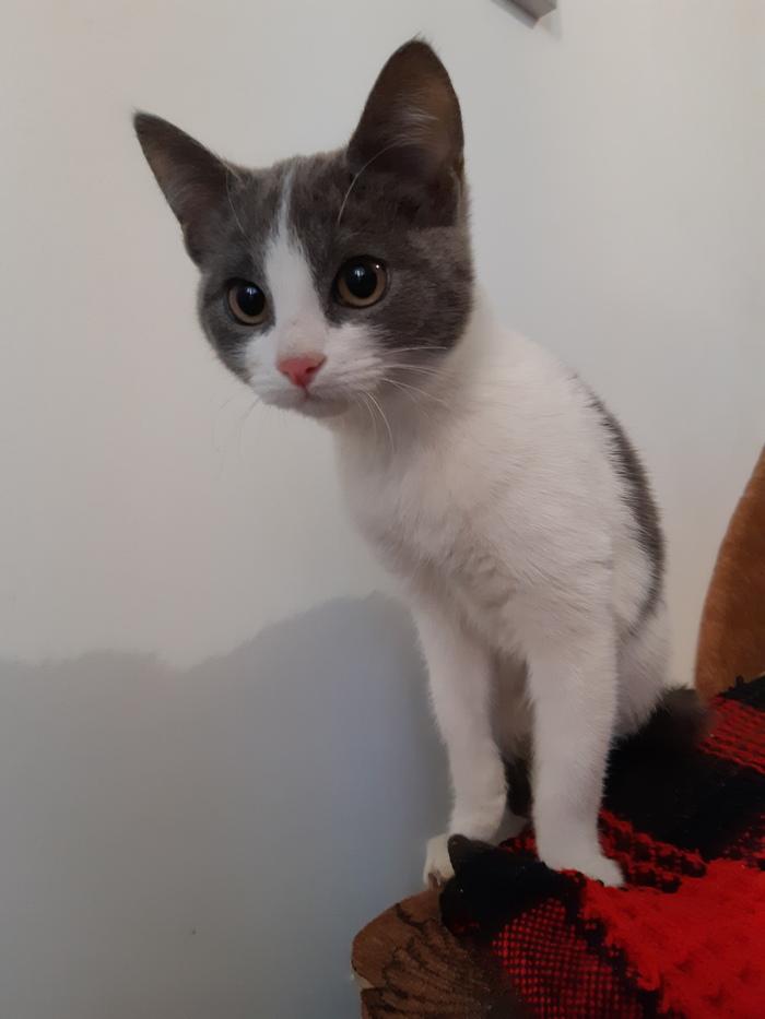Помогите найти котёнку дом (Краснодар) Кот, Потеряшка, Длиннопост