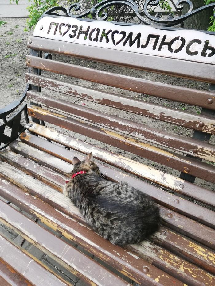 """Новый вид """"мартовских"""" котов Кот, Весна, На лавочке"""