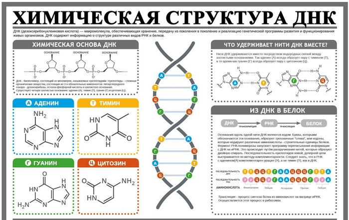 25 апреля. День ДНК Статистика, Инфографика, ДНК, Наука, Длиннопост