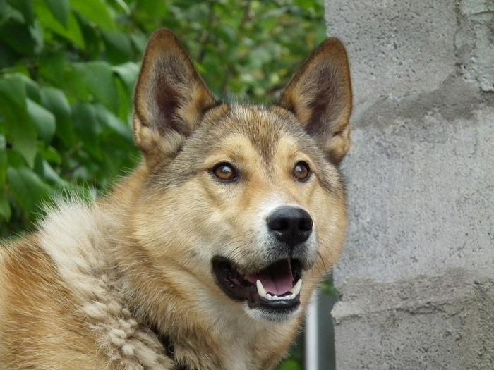Астраханцы спасли пса, застрявшего в коллекторе Астрахань, Южная Волна, Собака, Собаки и люди, Защита животных, Общество