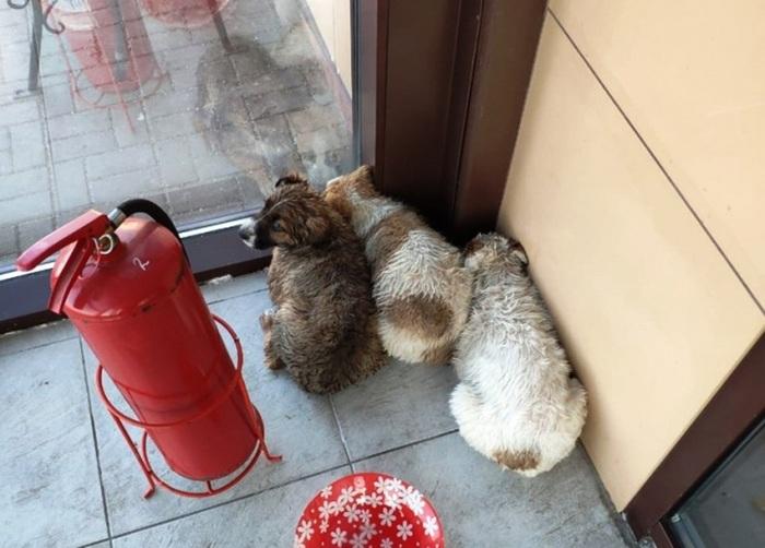 Троих беспомощных щенков бросили посреди Финского залива Щенки, Фотография, Милота, Спасатель, Длиннопост, Собака