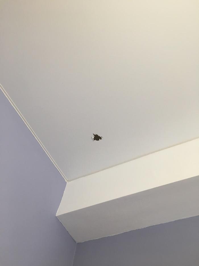 Кот испортил натяжной потолок. Натяжные потолки, Ремонт, Кот, Длиннопост, Вопрос, Дыра