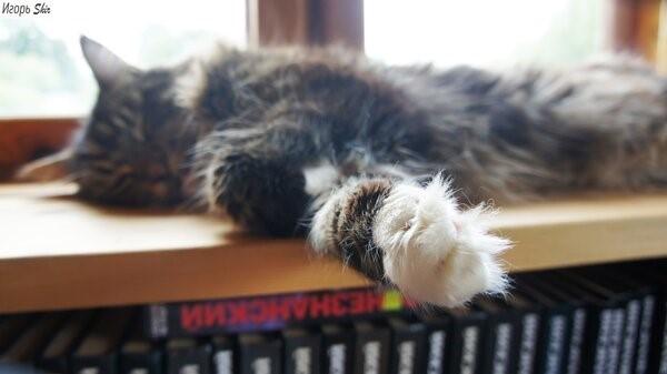Кот спит. Не трогайте. Кот, Кошмар, Длиннопост
