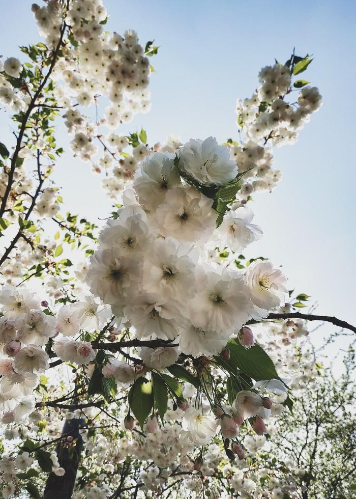 Сияние цвета и света Мобильная фотография, Начинающий фотограф, Цветы