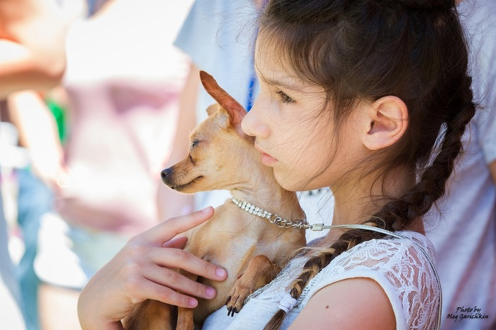 Продолжаю публиковать репортажные снимки с выставок собак, прошедших по Югу России в 2018 году, приятного просмотра))) Собака, Собаки и люди, Выставка собак, Собачьи будни, Собачники, Длиннопост