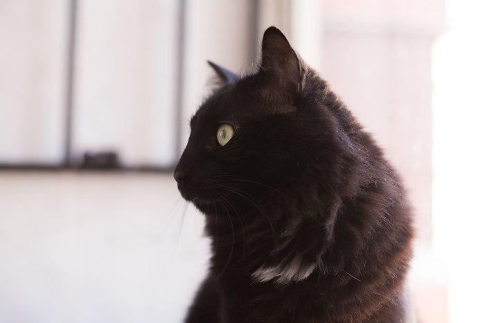 Мир, труд, мяу Черный кот, Сатана, Питомец, Домашний любимец, Кот, Котомафия, Животные