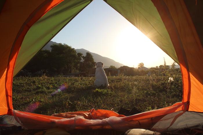 Umadog встречает рассвет в походе Лабрадор, Собака, Травка, Поход, Палатка, Утро, Рассвет