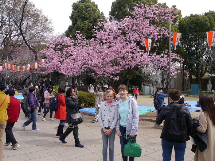Сакура без фотошопа Сакура, Япония, Природа, Длиннопост