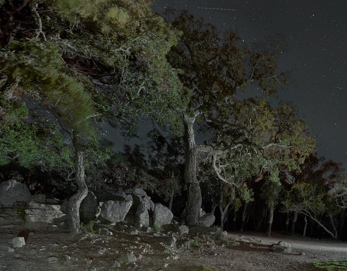 Где с дубов-колдунов облетает... Лес, Ночь, Ночная съемка, Дуб, Археология, Мистика, Фотография, Древность