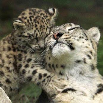 Детеныши и их мамы 4 часть Фауна, Животные, Детеныш, Фотография, Длиннопост