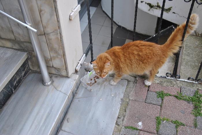 Стамбульских кошечек и котиков к вам в ленту Стамбул, Котомафия, Длиннопост, Кот