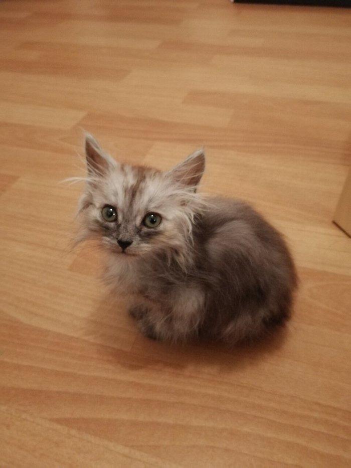 Как я купил котенка через авито, или как делать не надо Без рейтинга, Домашние животные, Ублюдки, Авито, Видео, Кот, Длиннопост, Негатив