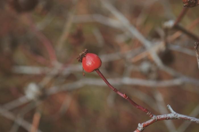 Фотографии из леса. Часть 2. Лес, Природа, Цветы, Весна, Фотография, Горячее, Дерево, Длиннопост