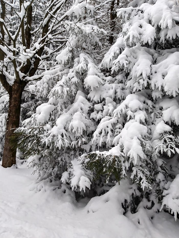 Одного путешествия пост. Часть 1 Снежка, Польша, Зима, Путешествия, Длиннопост, Прогулка