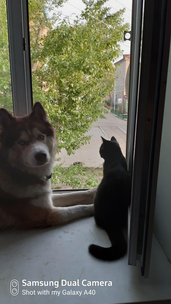Когда на улицу не пускают, но очень хочется! Улица, Окно, Длиннопост, Кот, Собака