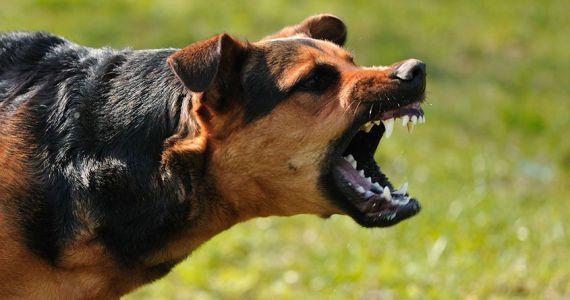 Если на вас нападает собака. Нападение собаки, Защита, Совет, Советы из интернета, Собака, Нападение собак