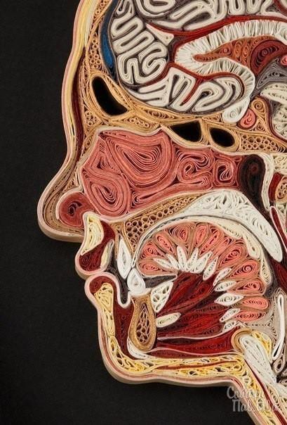 Анатомия как хобби Хобби, Медицина, Анатомия, Длиннопост, Квиллинг