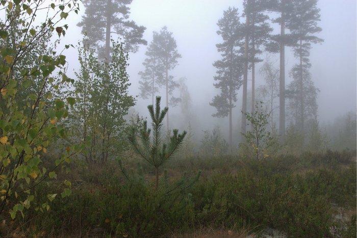 """Сутки в лесу. Или """"для чего нам уроки ОБЖ"""" Лес, Поход, Выживание, Длиннопост"""