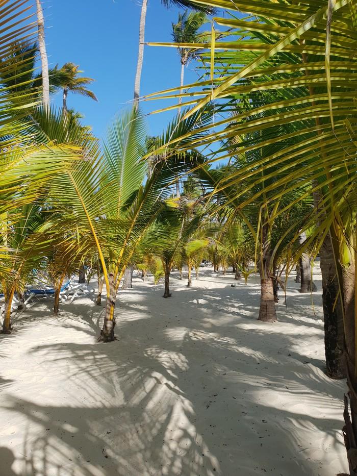 Мифы о Доминикане Путешествия, Республика доминикана, Доминикана, Отпуск, Длиннопост