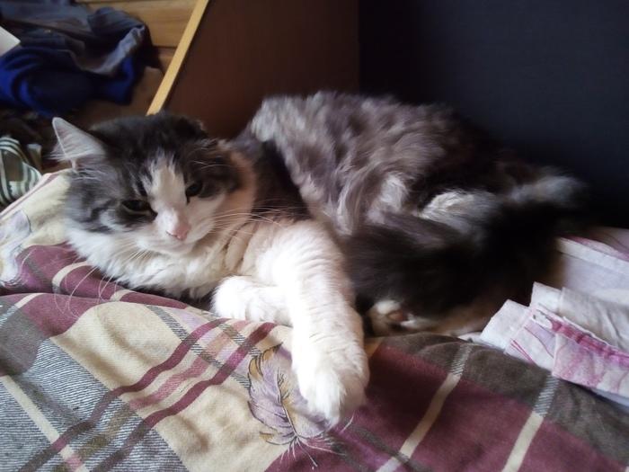 11 лет Кот, Домашние животные, Постельное бельё