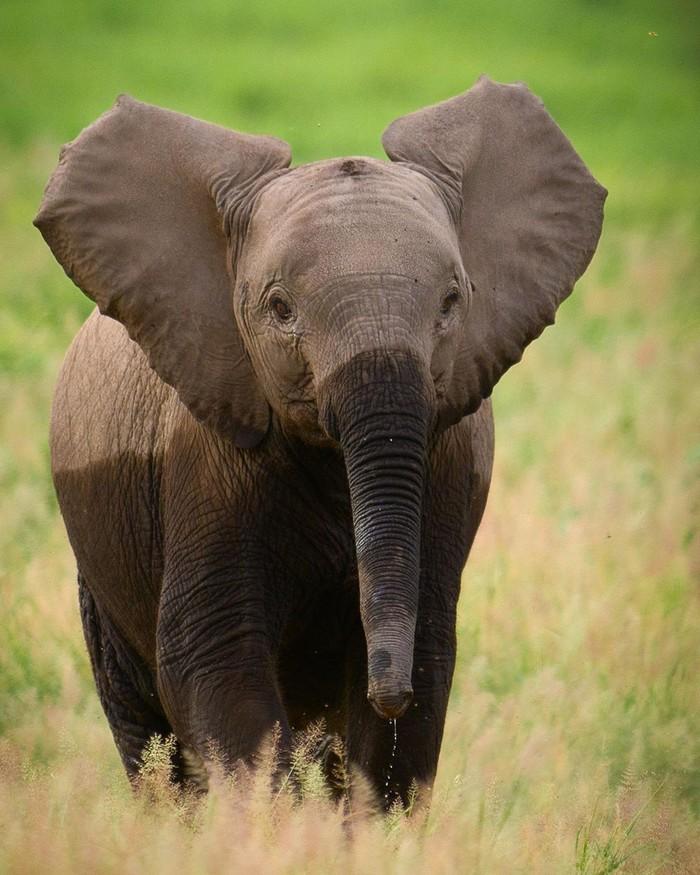 Промочил ноги Фотография, Животные, Слоненок, Милота, Слоны