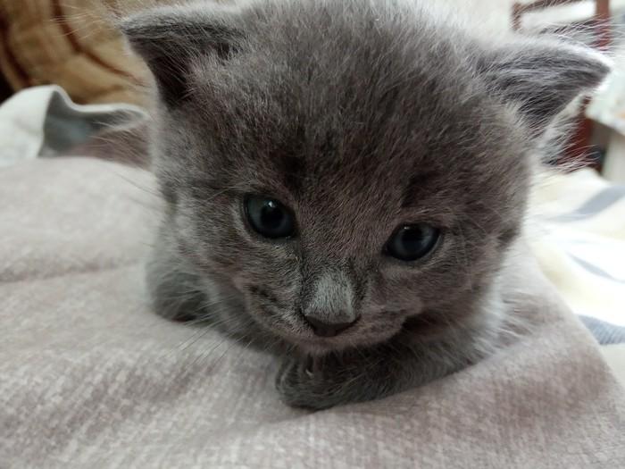 Просто котята Котята, Деревня, Мило, Длиннопост, Кот