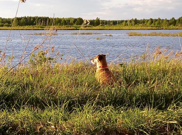 Созерцает Собака, Джек-Рассел-Терьер, Природа