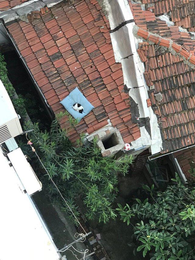 Подушка собаки упала на крышу пару дней назад. Кот, Подушка