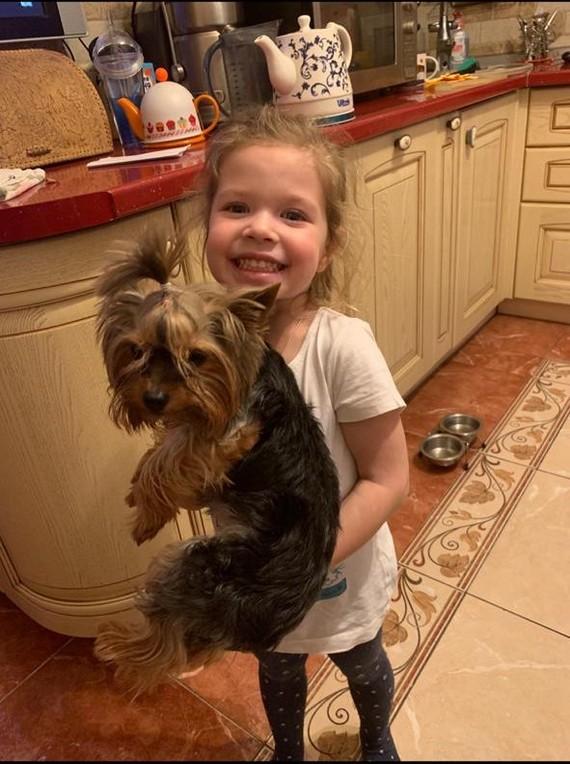 Пропала собака Пропала собака, Московская область, Собака, Помогите найти, Без рейтинга, Помощь