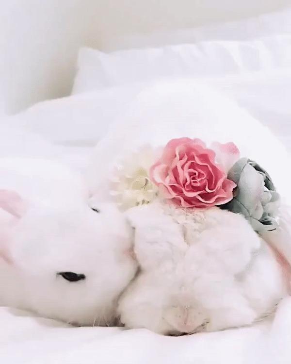 Кроличьи нежности