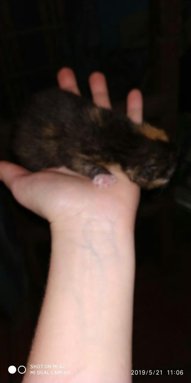 Отдам котиков в добрые руки как подрастут Котята, Отдам, В добрые руки, Москва, Длиннопост, Без рейтинга, Кот