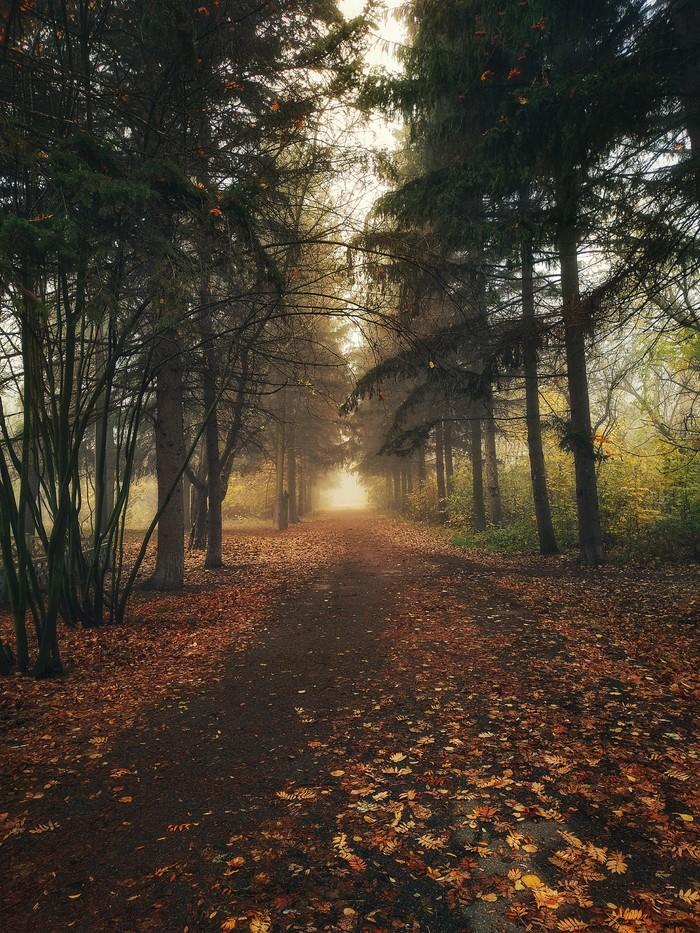 Осенний туман Фотография, Мобильная фотография, Лес, Туман, Длиннопост, Meizu