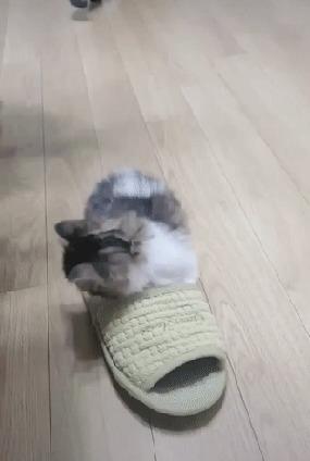Хорошо зафиксированный кот...