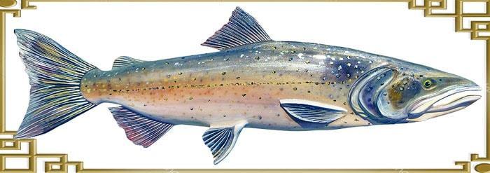 Чавыча: уникальная рыба семейства лососевых. Чавыча, Лосось, Рыба, Видео, Длиннопост