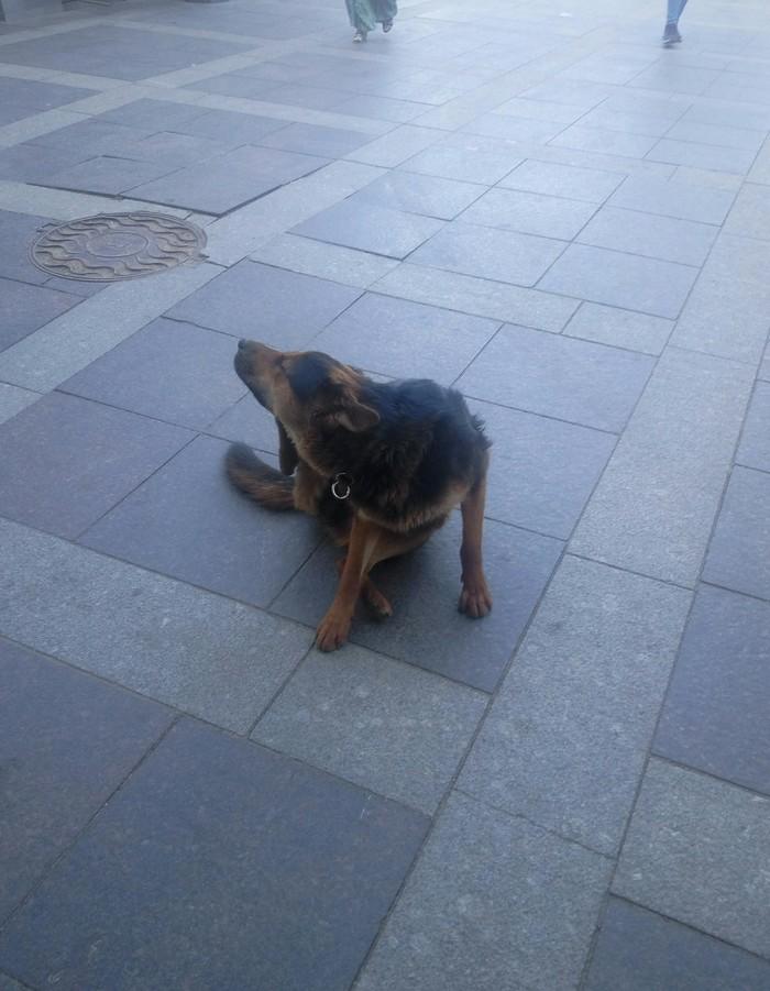 071599f1adef У метро Московские ворота лежит пёс. Без рейтинга, Собака, Санкт-