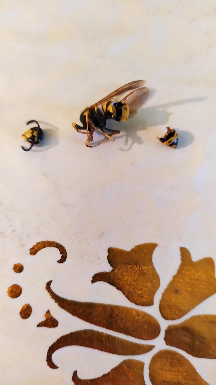 Укус пчелы Укус, История моей жизни, Длиннопост, Оса