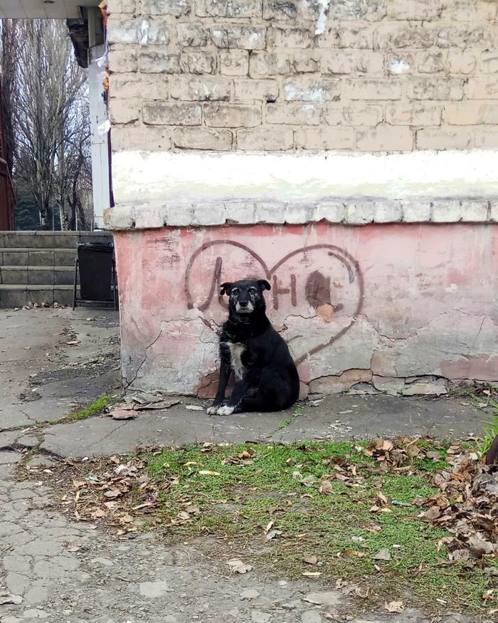 Лена, у тебя здесь поклонник .. Фото на тапок, Старый Пес, Ждет лену, Собака