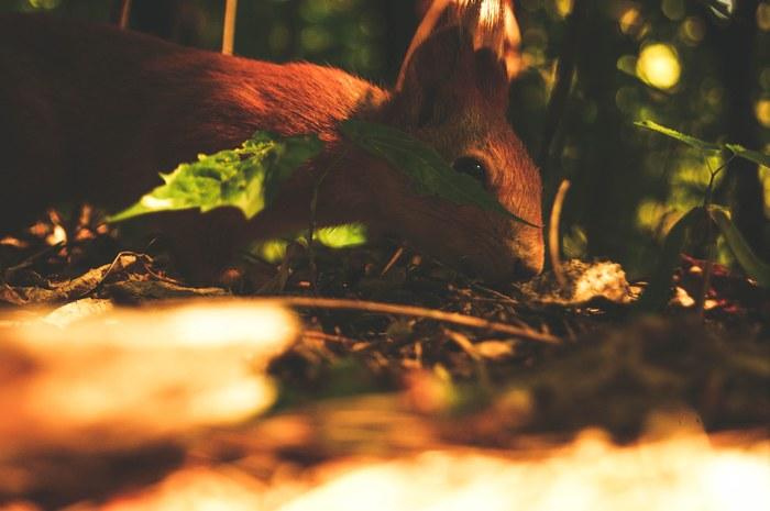 Дружелюбный белка Белка, Лес, Фотография, Животные