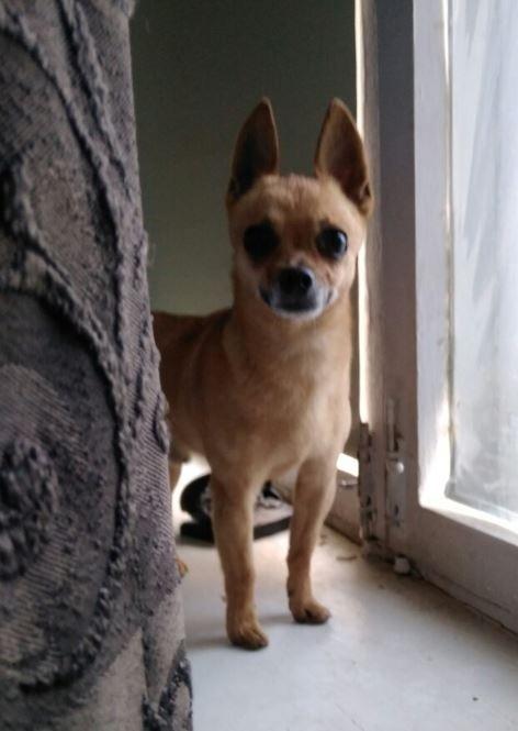 Найдена собака, г. Самара Без рейтинга, Потеряшка, Найдена собака, Самара, Собака