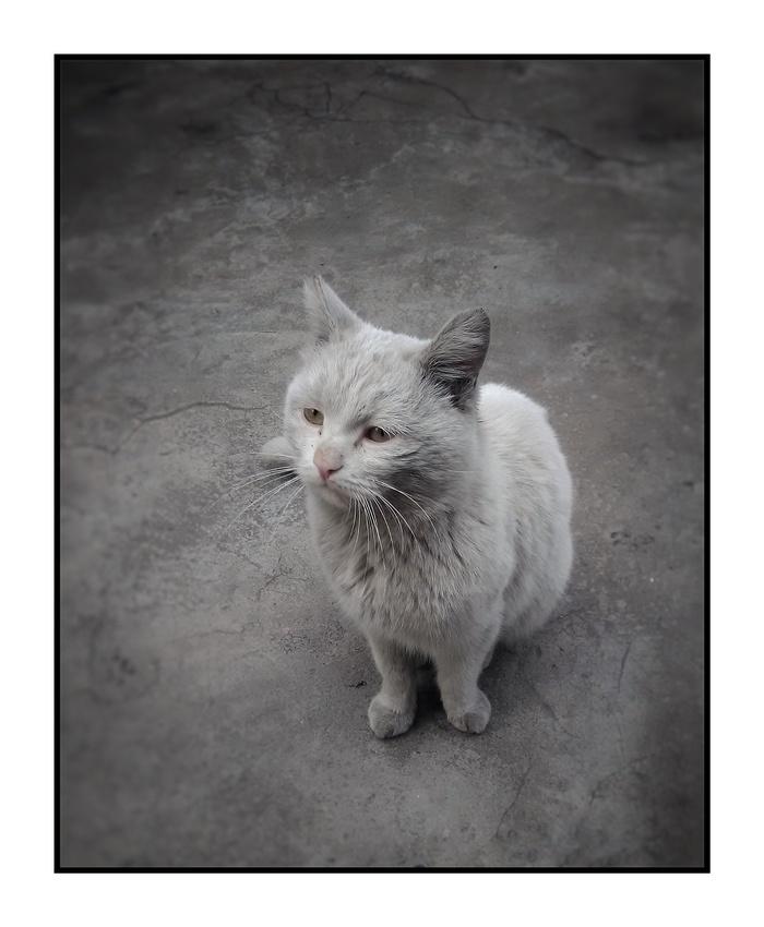 """Кот по кличке """"Зверъ"""" Кот, Печаль"""