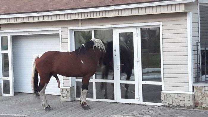 Ох какая красавица, у нас в конюшне таких нет... Лошади, Забавное, Влюбленность, Сибирь, Кемерово, Длиннопост