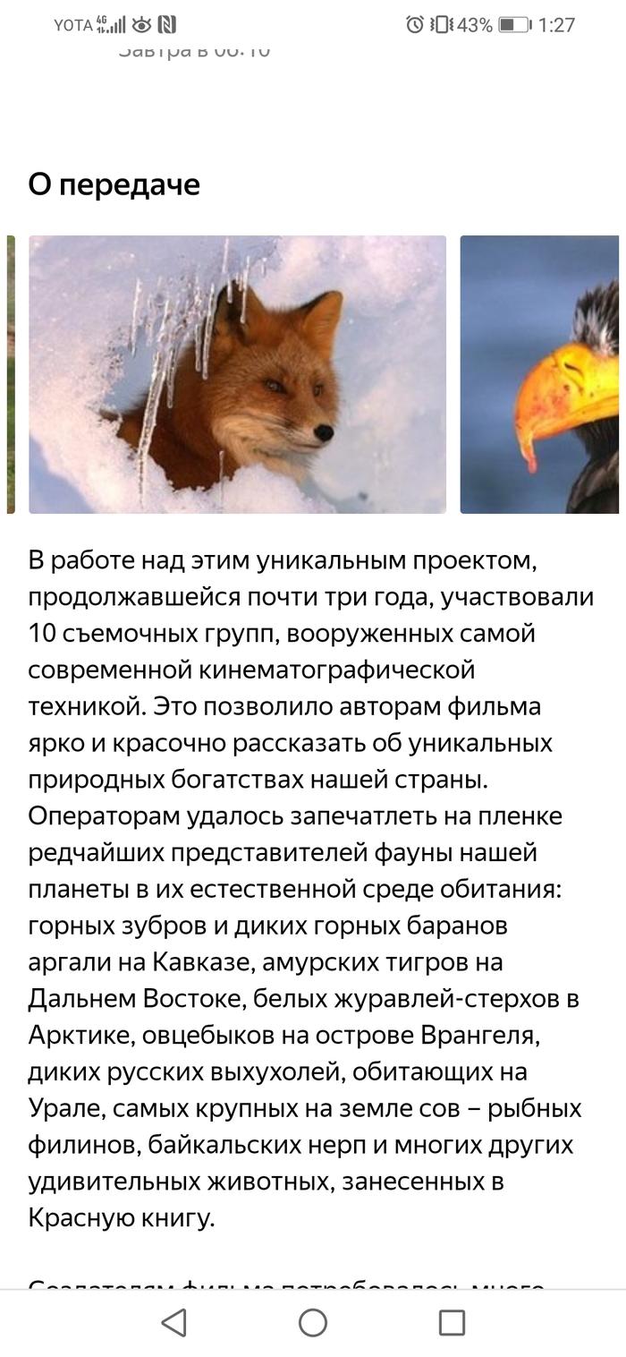 Приоритеты Первый канал, Россия, Телевидение, Не надо так, Длиннопост
